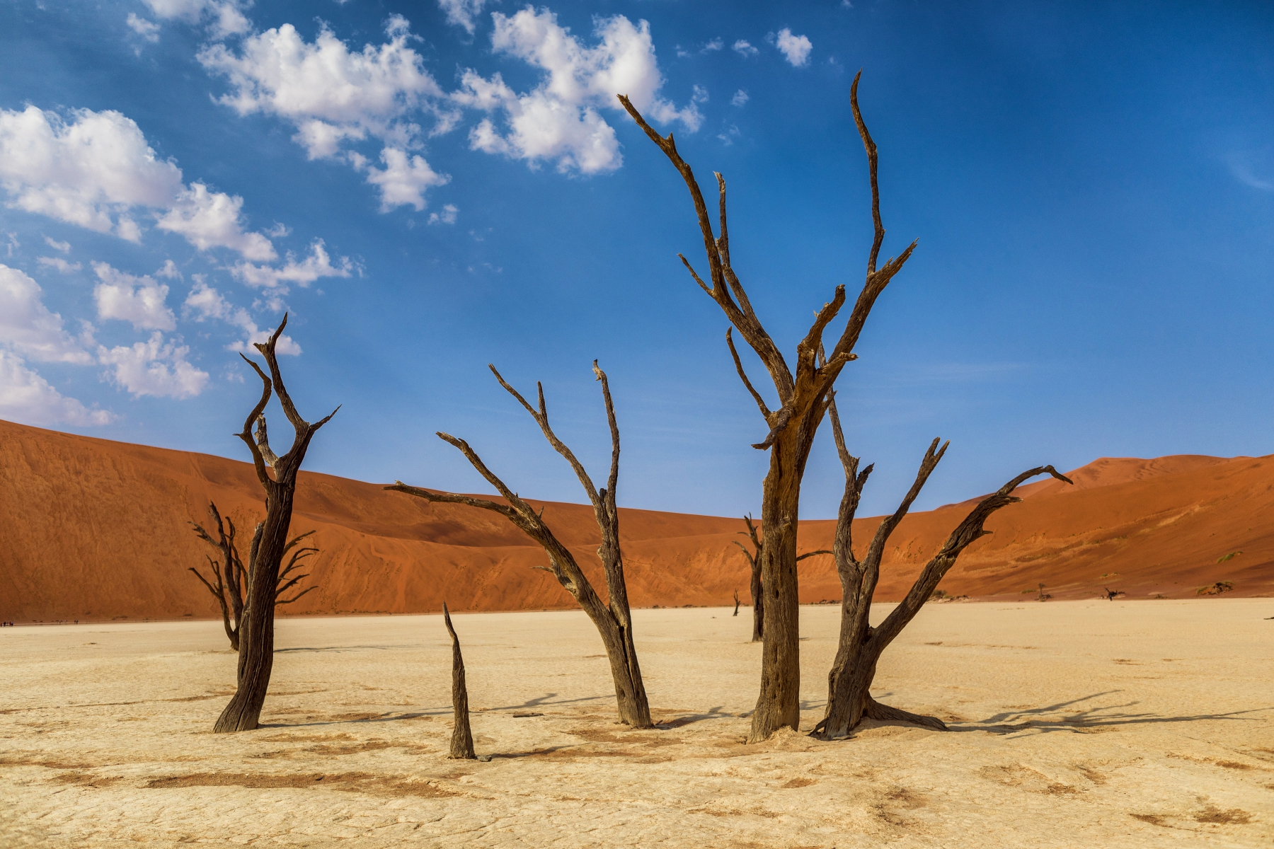 pierde desert de desert