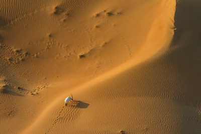 Lonely Oryx in the UAE